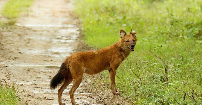 Kabini-Wildlife5
