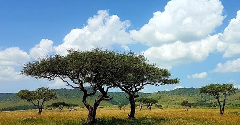masai-mara11