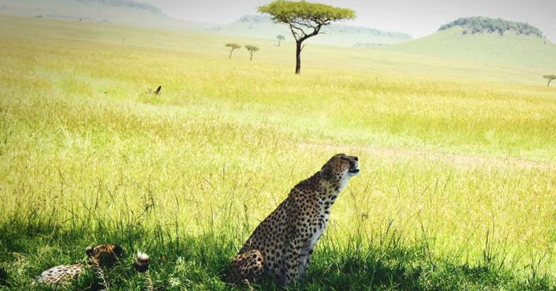 masai-mara9