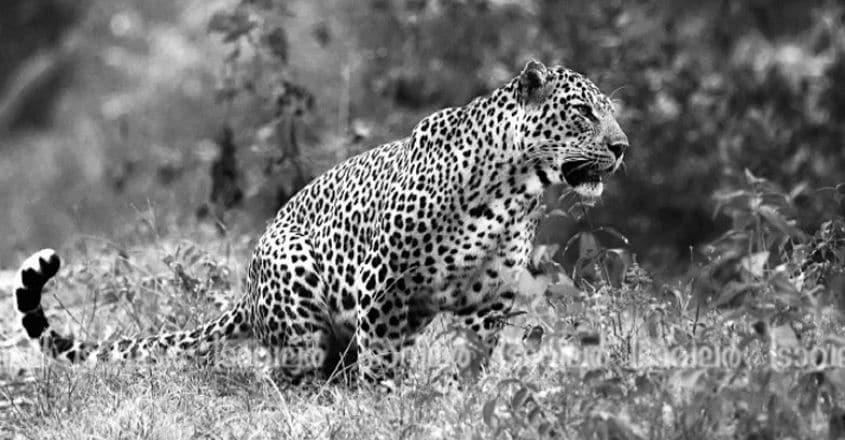 Wildlife-Photography1