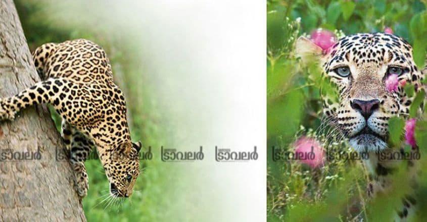 Wildlife-Photography3