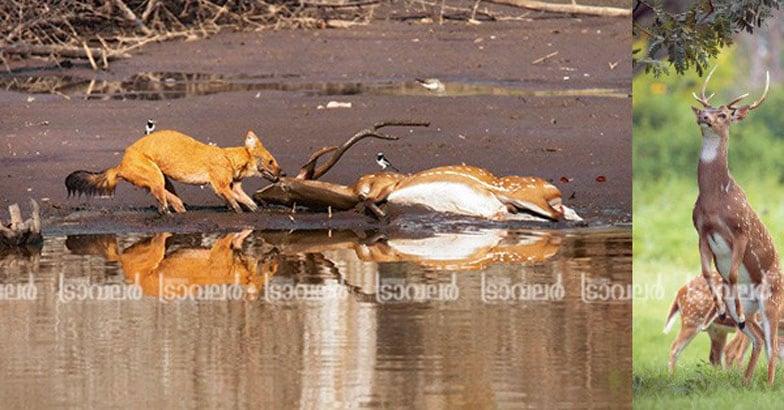 Wildlife-Photography4