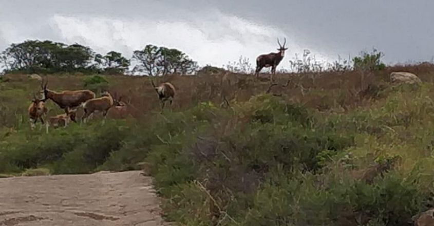 south-africa-trip10