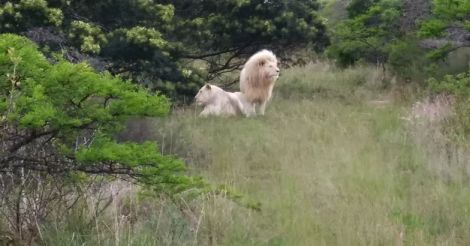 south-africa-trip11
