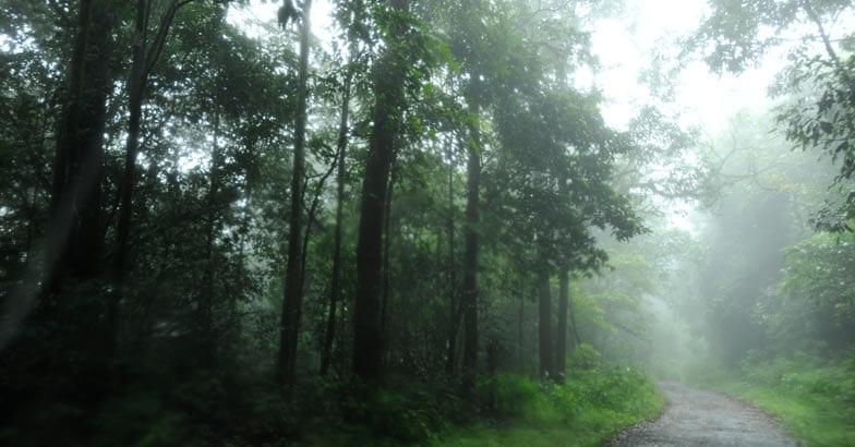 Gavi route