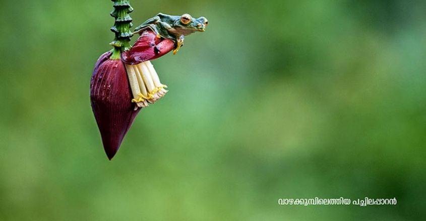 Wildlife-photography5