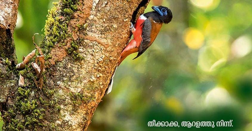 Wildlife-photography7