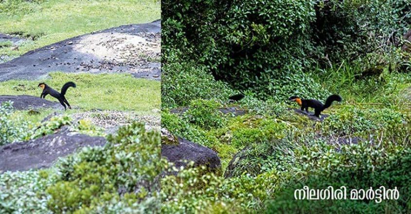 Wildlife-photography8