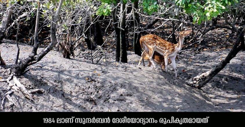 Sundarbans-National-Park