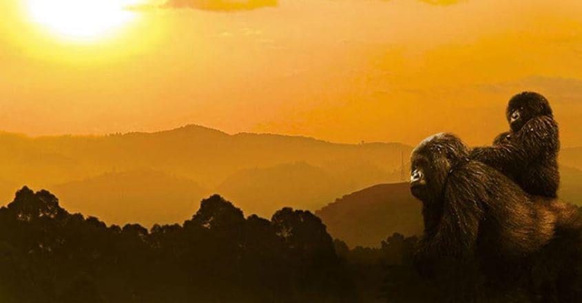Virunga-National-Park,-goma9