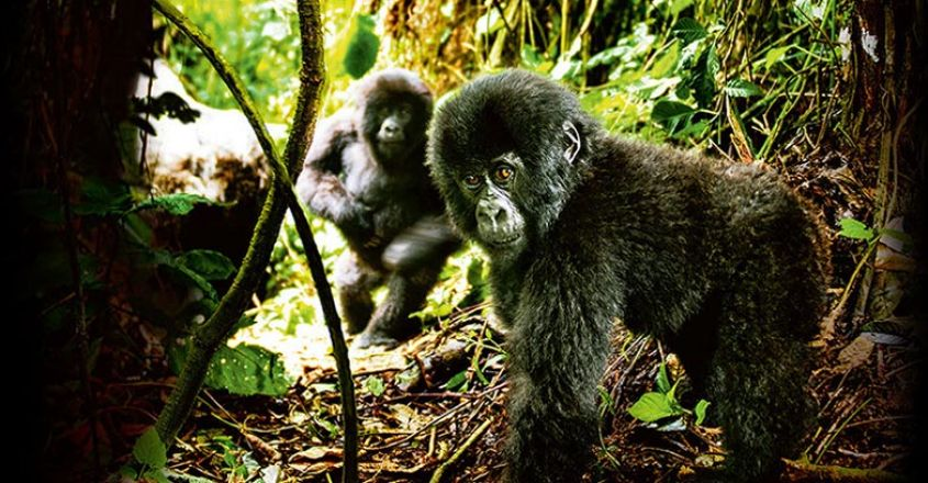 Virunga-National-Park1