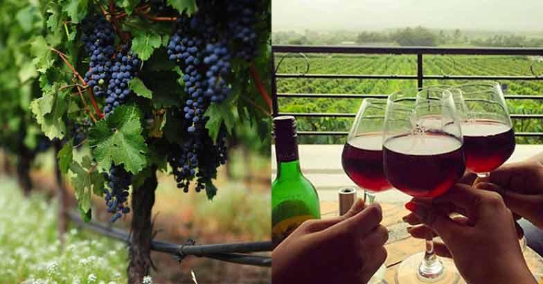 wine-place