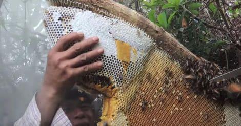 honey-hunt-nepal6