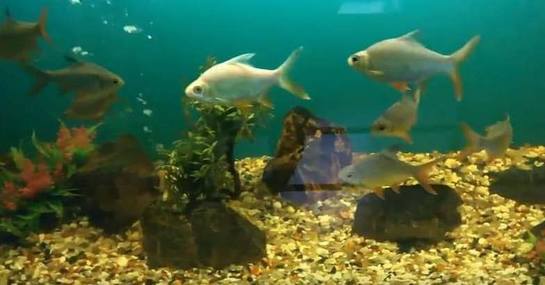 Neyyar-Dam-Aquarium1