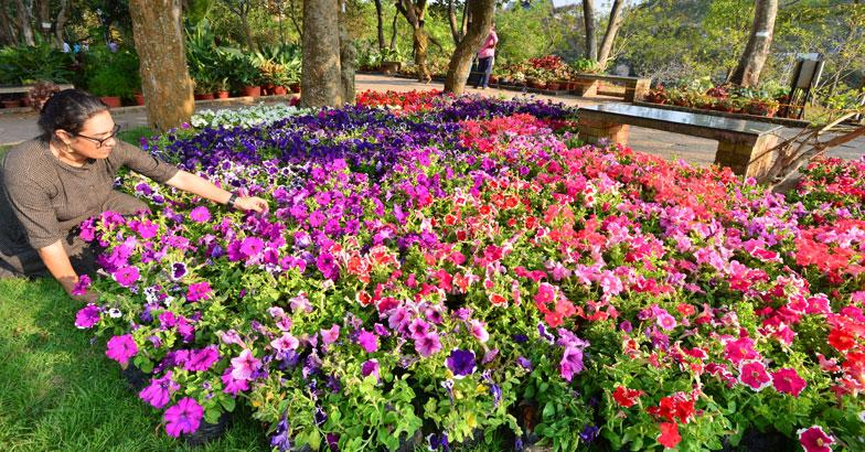 flower-show3