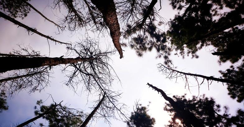 vagamon-pine-valley3