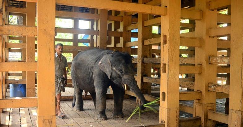 konni-Elephant-Reserve
