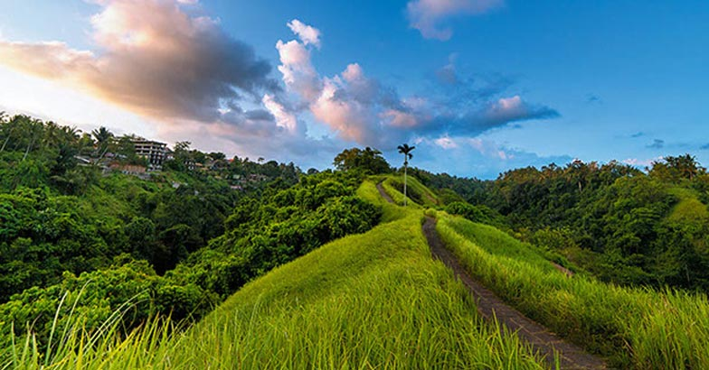 The famous Campuhan Ridge Walk in Ubud, Bali, Indonesia
