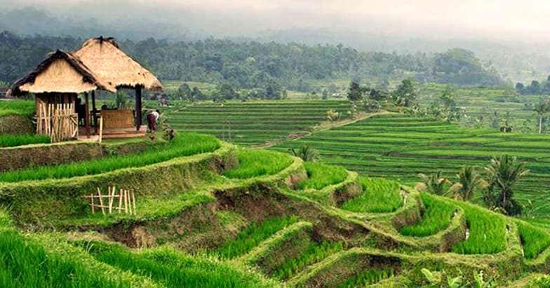 ubud-paddy-fields