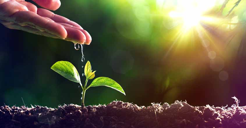 Planting-Tree