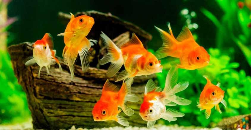 aquarium-845