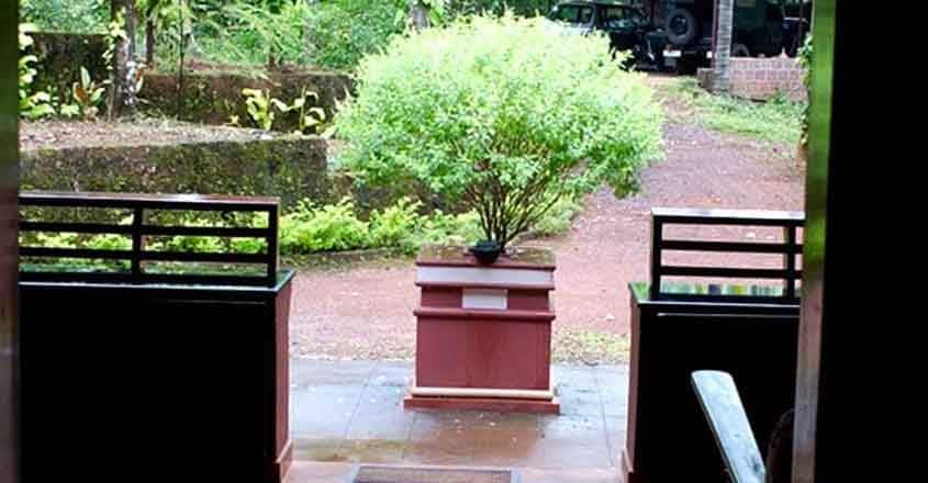 thulasi-plant