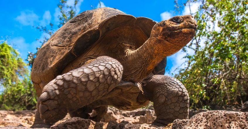 galapagos-islands-and-giant-tortoise