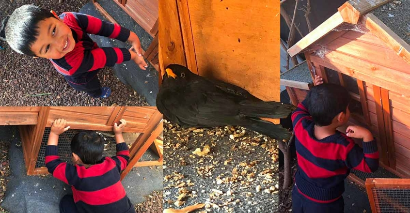 viral-video-of-three-year-old-mathew-with-a-bird