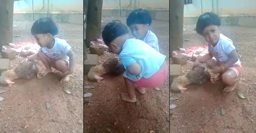 viral-video-of-a-little-girl-with-her-dead-hen