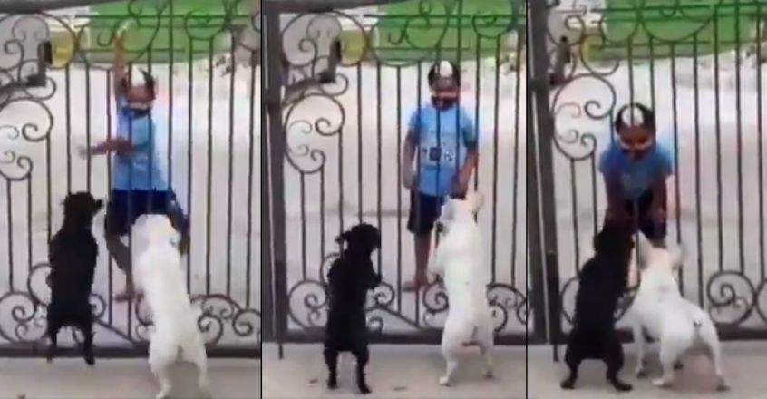 viral-video-of-a-little-boy-dancing-in-front-of-dogs