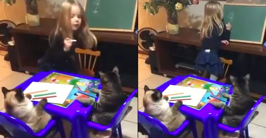 viral-video-of-a-little-girl-teaches-two-cats-how-to-draw