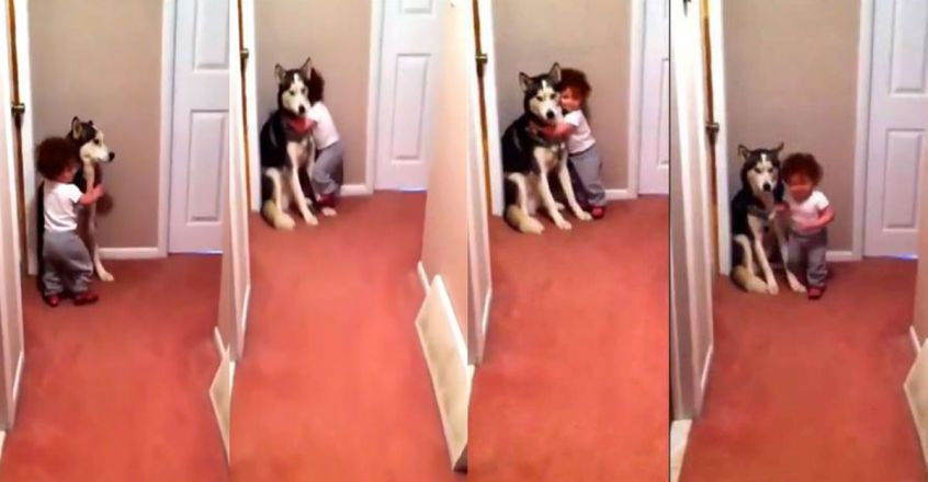 baby-and-the-dog-viral-video
