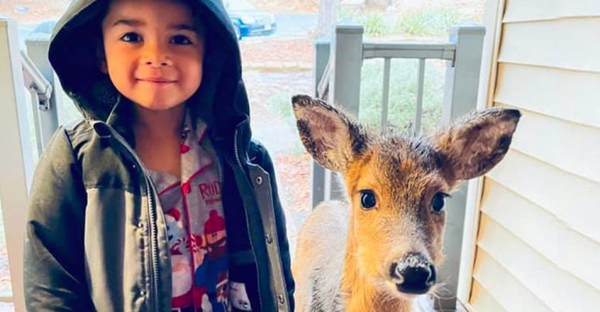 four-year-old-dominic-goes-out-to-play-comes-back-with-baby-deer
