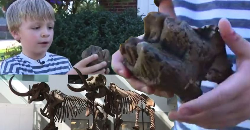 six-year-old-finds-12000-year-old-mastodon-tooth-in-rochester-hills-creek