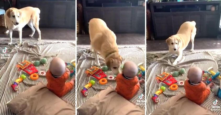 adorable-video-of-pet-dog-makes-toddler-laugh