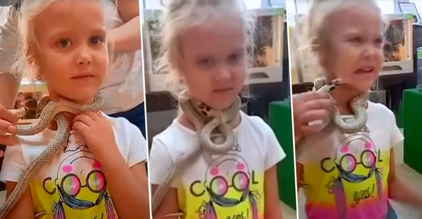 snake-bites-five-year-old-girls-face-poses-picture-in-russian-petting-zoo
