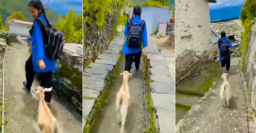 viral-video-of-a-goat-follows-young-girl-to-school-in-himachal-pradesh