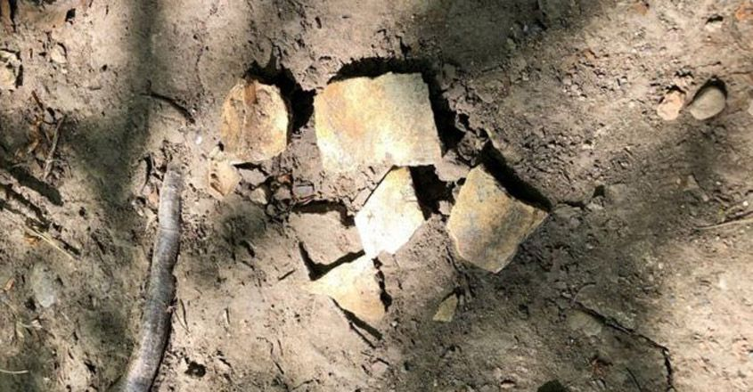 remains-found-by-three-year-old-believed-to-be-anglo-saxon-human-skull