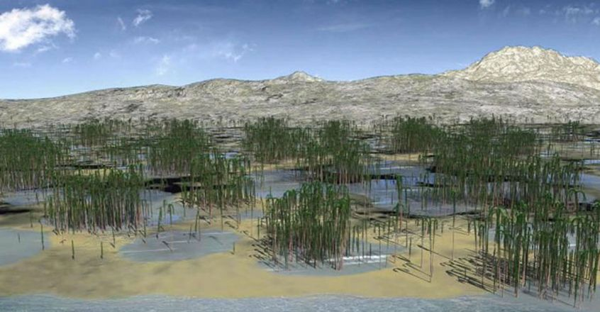 oldest-fossil-forest-in-china-discovered