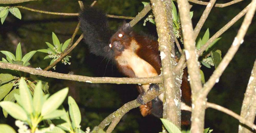 new-species-flying-squirrel-discovered-in-china