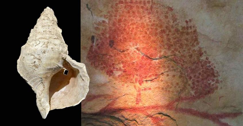 conch-shell-found-in-french-cave-oldest-known-seashell