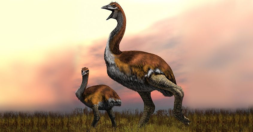 vorombe-titan-worlds-biggest-bird
