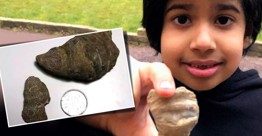 indian-origin-boy-from-the-uk-finds-age-old-fossil-in-his-garden