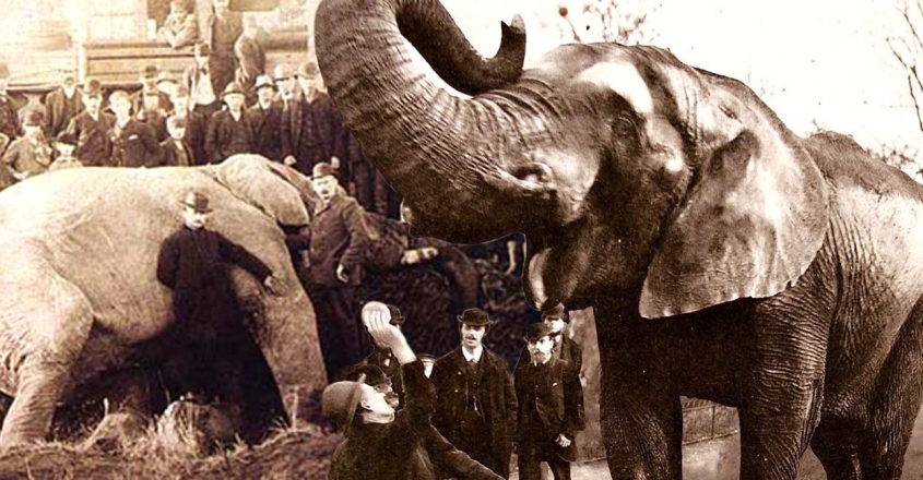 life-and-mysterious-death-of-animal-superstar-jumbo-the-elephant