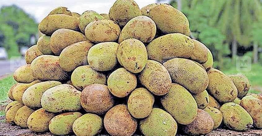palakkad-jackfruit