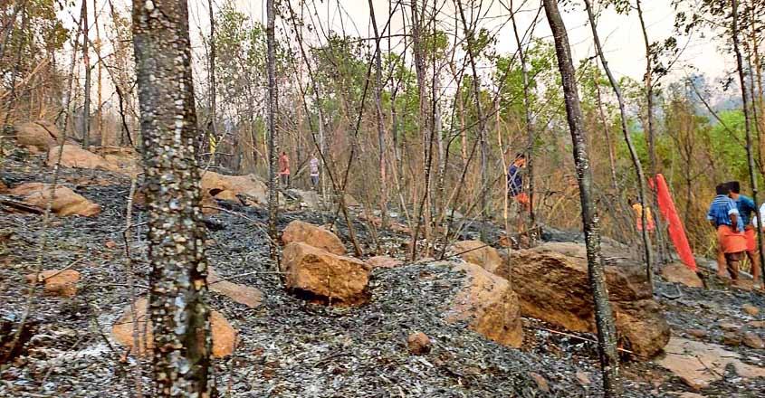 thrissur-kottambathoor-forest