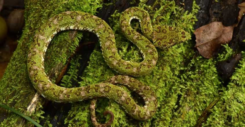 Rainforest Reveals Treasure Trove of Rare And Unknown Creatures