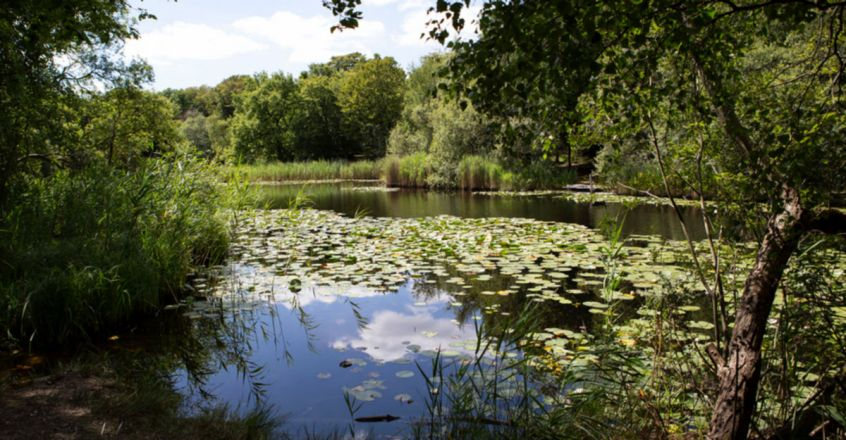 Epping Forest's haunted history