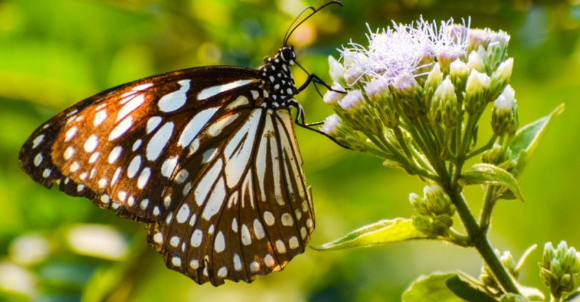 A catalogue of the moths and butterflies of India