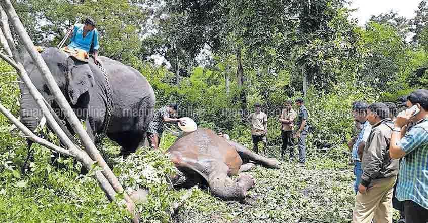 Truck hits, injured wild elephant